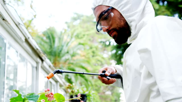 Man spraying pesticides over plant video