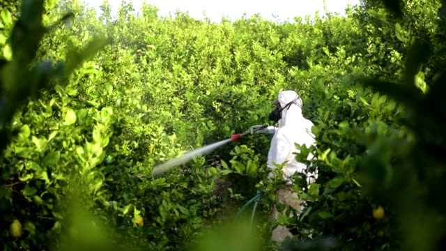 man spraying toxic pesticides, pesticide, insecticides on fruit lemon growing plantation - insetticida video stock e b–roll