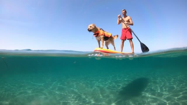 a man supping with a dog on a beautiful day - summer background filmów i materiałów b-roll