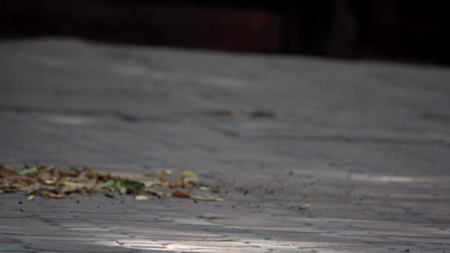 a man sweeping up leaves outdoors at park - пешеходная дорожка путь сообщения стоковые видео и кадры b-roll