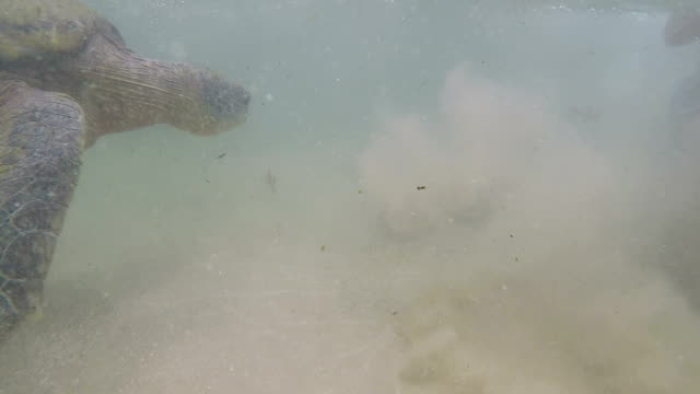 Man swims with a large sea turtle underwater