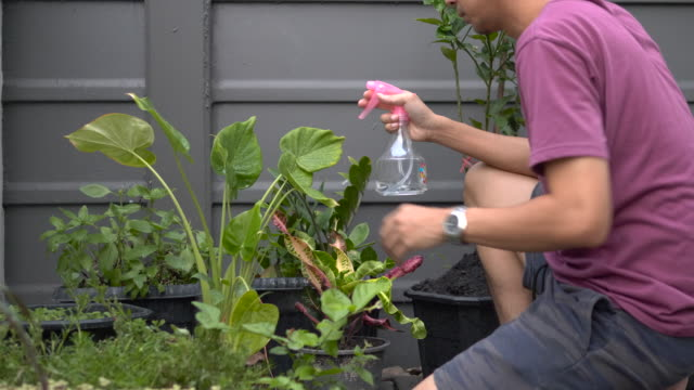 Man taking care of his houseplants, spraying them with water Man taking care of his houseplants, spraying them with water mid adult men stock videos & royalty-free footage