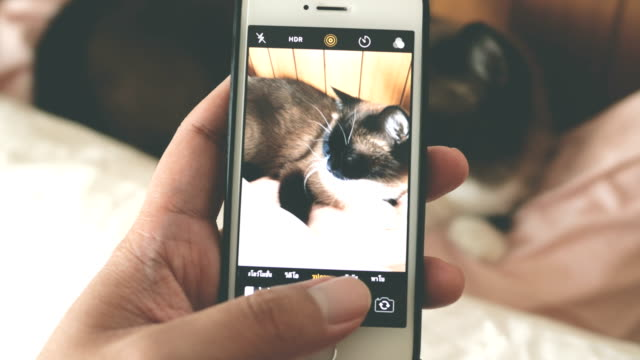 pov : uomo che scatta foto di gatto - fotografia immagine video stock e b–roll