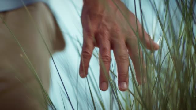 男性が手を触れリード - 湿地草点の映像素材/bロール