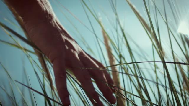 mann mit seiner hand berühren reed - schilf stock-videos und b-roll-filmmaterial