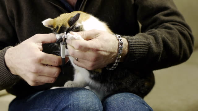 mann schneiden tricolor katze claws - fingernagel stock-videos und b-roll-filmmaterial