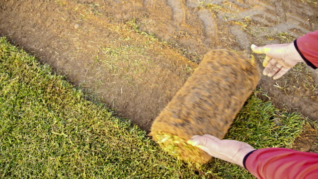 slo mo man unroll the sod on a field - rotolo video stock e b–roll