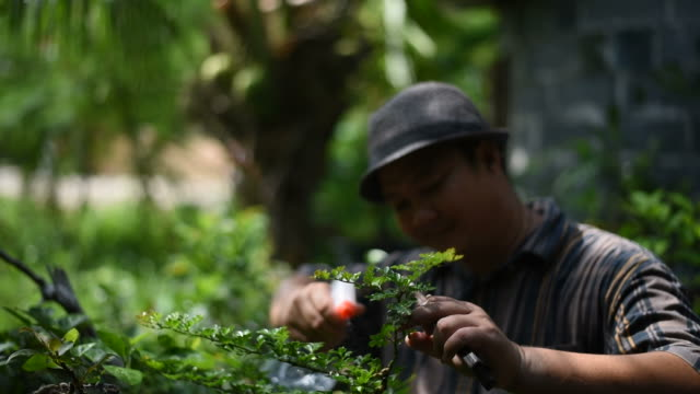 A man using water sprayer and checking a bonsai tree. video