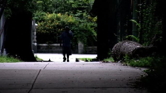 man walking. birds fly up. - uzun adımlarla yürümek stok videoları ve detay görüntü çekimi