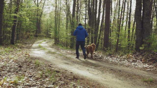 man walking dog - hund skog bildbanksvideor och videomaterial från bakom kulisserna