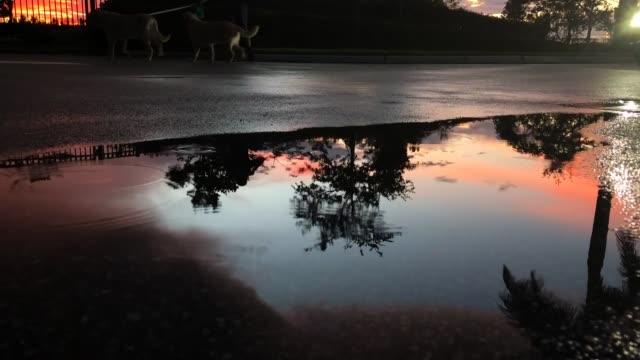 vídeos de stock e filmes b-roll de man walking dogs in wet street at sunset - poça