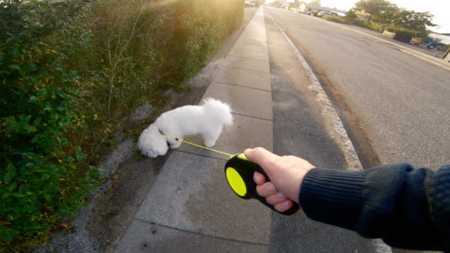 POV of man walking his dog on sidewalk as the sun sets Personal perspective (POV) seen from a man walking with his dog on a sidewalk. The man holds on to a pet leash attached to the dog. The dog is white. leash stock videos & royalty-free footage