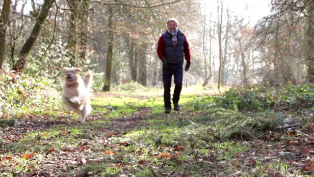 man walking his dog through woods - hund skog bildbanksvideor och videomaterial från bakom kulisserna