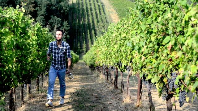 Man Walking in a Vineyard video