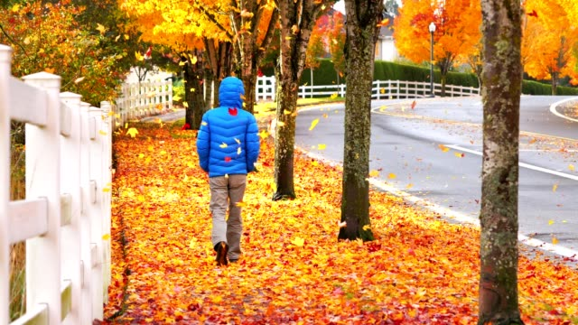 Man walking on sidewalk while autumn leaves falling down video