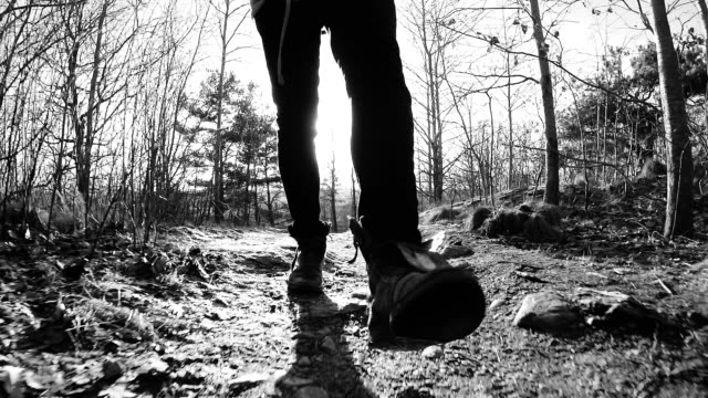 Man Walking through Forest video