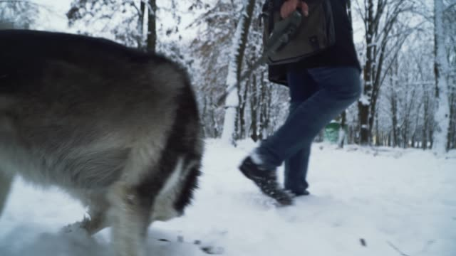 A man walking with a husky in the park keeping the dog on a leash. Dog walk next to the owner. A man walking with a husky in the park keeping the dog on a leash. Dog walk next to the owner. hound stock videos & royalty-free footage