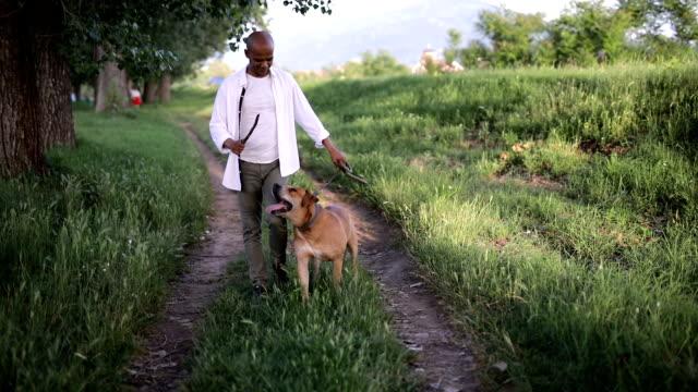 man går med sin favorit hus djur - hund skog bildbanksvideor och videomaterial från bakom kulisserna