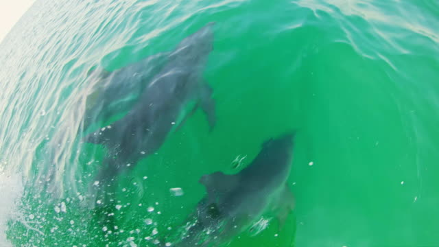 stockvideo's en b-roll-footage met pov man kijken dolfijnen vanaf een boot - perzische golfstaten
