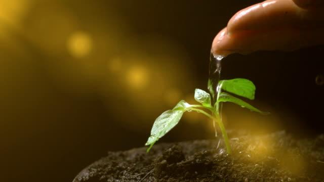 stockvideo's en b-roll-footage met man water een plant, slow motion, concept van de ontwikkeling van de landbouw, ecologie - new world