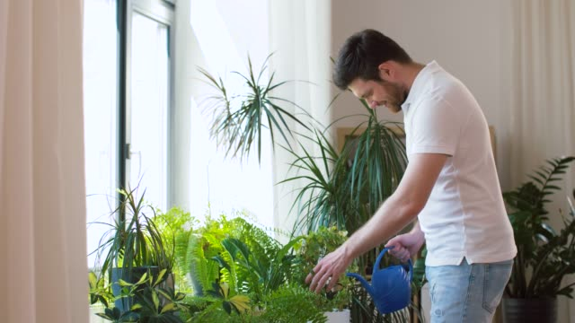 man watering houseplants at home people, nature and plants care concept - man watering houseplants at home potted plant stock videos & royalty-free footage