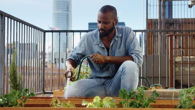 mann, bewässerung von pflanzen und das sammeln von pflanzen im garten auf dem dach - dachgarten videos stock-videos und b-roll-filmmaterial