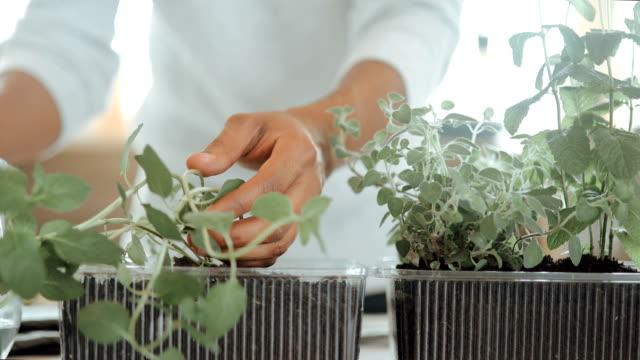 menschen bewässern pflanzen zu hause - gemüsegarten stock-videos und b-roll-filmmaterial