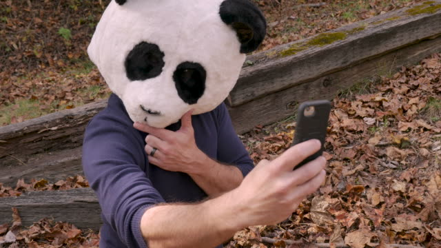Man wearing a panda head mask taking selfies with a smart phone and sharing them Proud man wearing a panda head mask taking selfies with a smart phone and sharing them on social media on his mobile device in a park vanity stock videos & royalty-free footage