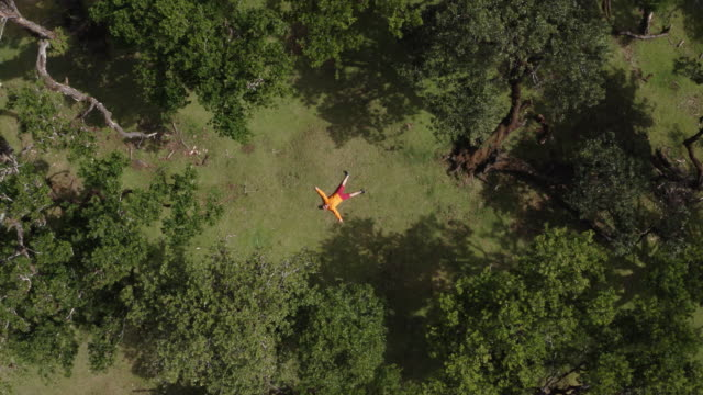 vídeos de stock e filmes b-roll de 4k man wearing bright clothes lying on ground in forest drone moving upwards footage - ilha da madeira