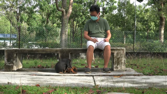 足元に子犬を置いた公園のベンチに座っているフェイスマスクを着用した男。 - ベンチ点の映像素材/bロール