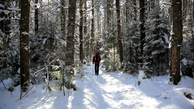 Man with Backpack Hiking in Forest in Winter video