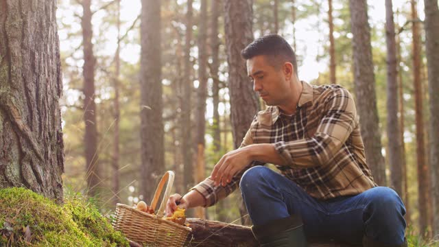 man with basket picking mushrooms in forest