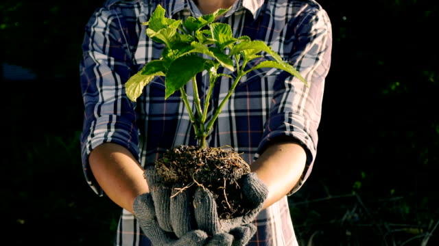 man with glove holding young tree for prepare to plant on ground - erba medica video stock e b–roll