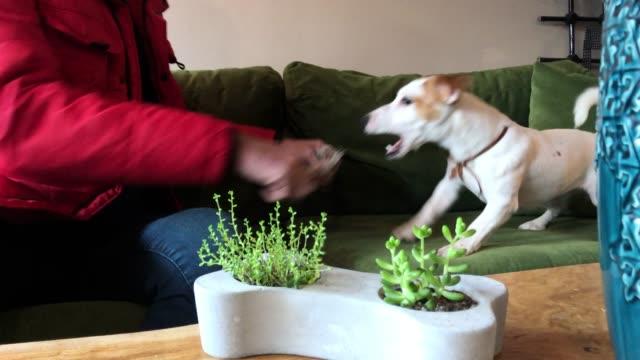 stockvideo's en b-roll-footage met man met zijn hond - alleen één mid volwassen man