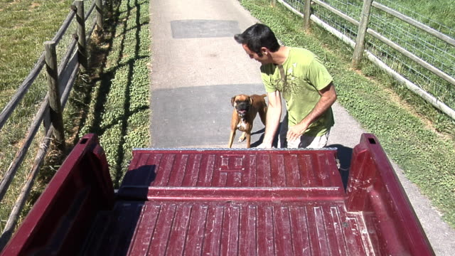 Man with pet dog getting into truck video