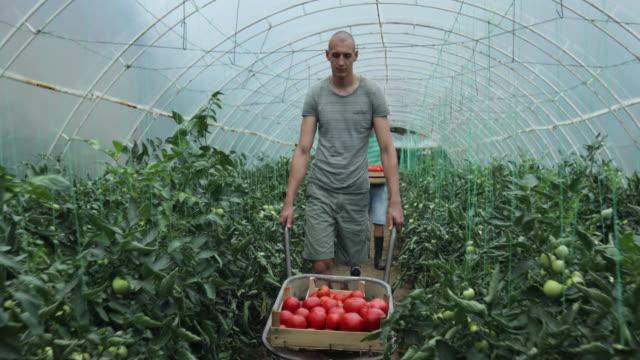 vídeos y material grabado en eventos de stock de hombre con pierna protésica empujando un carrito con tomates - cosechar