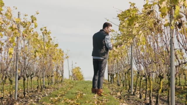 Man som arbetar på en liten vingård i Skandinavien video