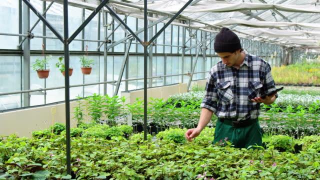 vídeos de stock e filmes b-roll de man working in greenhouse plantation - estufa estrutura feita pelo homem