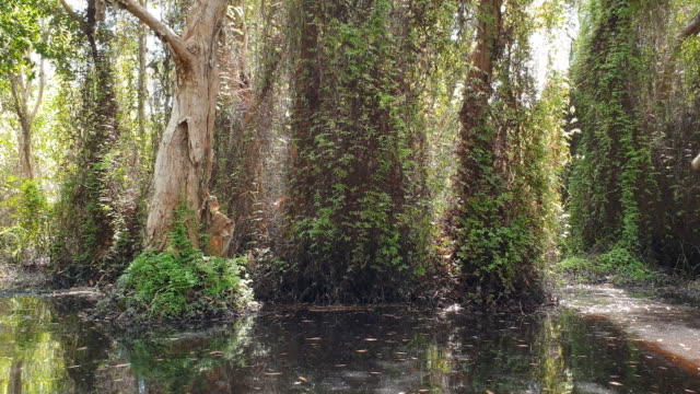 Mangrove forest.Wetland is primary source of small aquatic animals and ecotourism.
