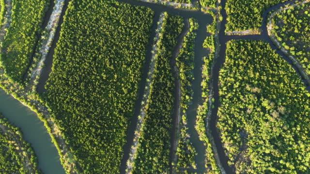 vídeos de stock, filmes e b-roll de manguezais perto de kampot, camboja - estreito mar