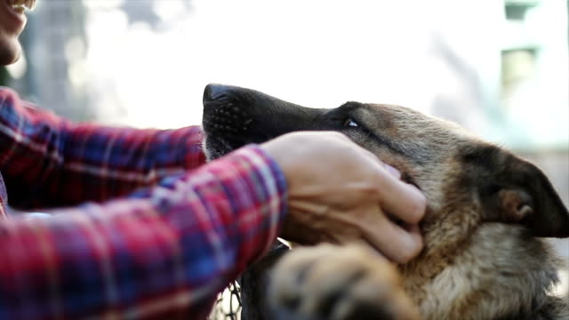 man's hand stroking the dog's snout over fence - fiducia video stock e b–roll