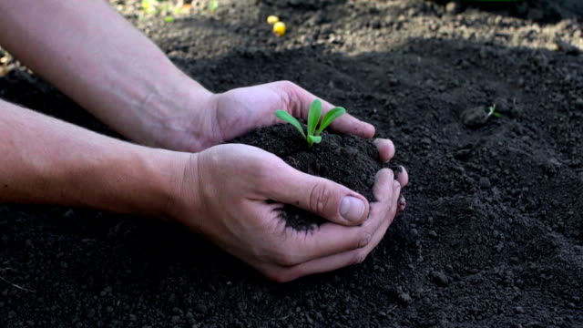 Man's hands planting the seedlings into the soil over black background video