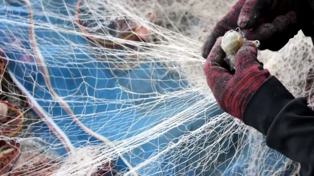 Mantis shrimp in fishing net video