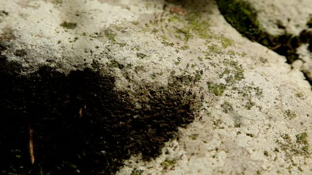 Many ants move the stone.