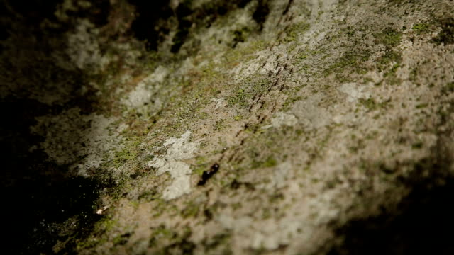 Many ants move the stone video