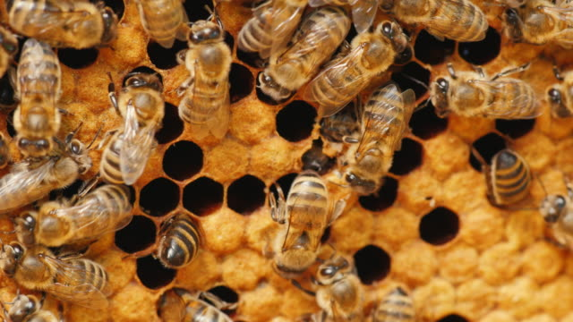 Many bees working on honeycombs with honey video