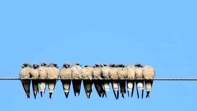 wiele ptaki lecące do przewodu - stado filmów i materiałów b-roll