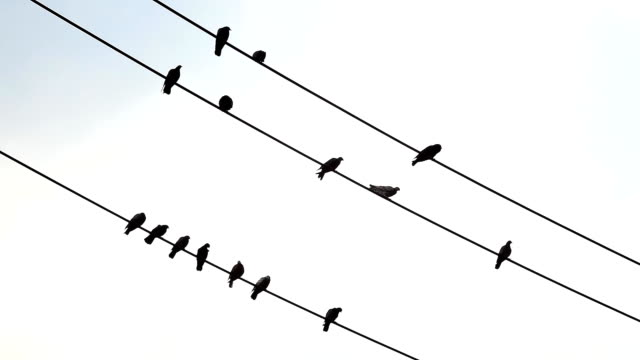 Many birds perched on a wire. video