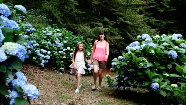 stockvideo's en b-roll-footage met veel bloeiende hortensia struiken groeien in het park. het meisje, een jongen en een vrouw, gelukkig lopen langs de prachtige blauwe bloemen van de hortensia - hortensia