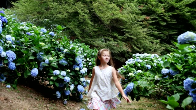 stockvideo's en b-roll-footage met veel bloeiende hortensia struiken groeien in het park. het meisje, de jongen, gelukkig loopt langs de prachtige blauwe bloemen van de hortensia - hortensia